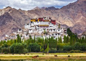 Immersion au Ladakh